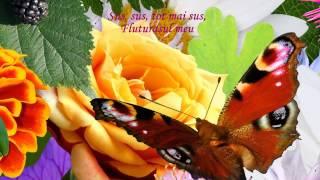 Cantec fluturasul meu