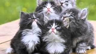 Cantec- Uf de i-ar vedea pisica