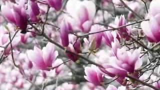 Cantec -Anotimpurile