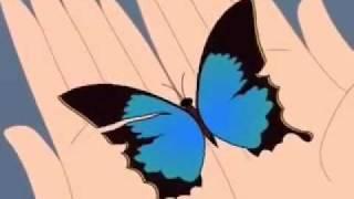 Cantec-Fluturas nu mai ai aripioare