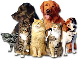 Ghicitori cu animale