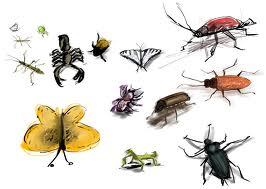Ghicitori despre insecte