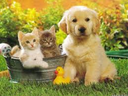 Fabula Câinele şi căţelul
