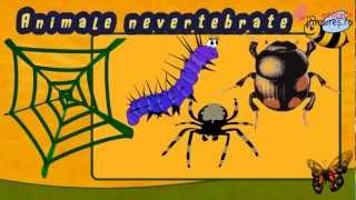 Recunoaste insectele