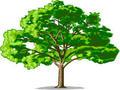 Cantec- Cresc doi pomi