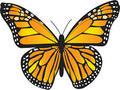 Cantec- Fluture
