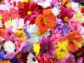 Poezii despre flori pentru copii
